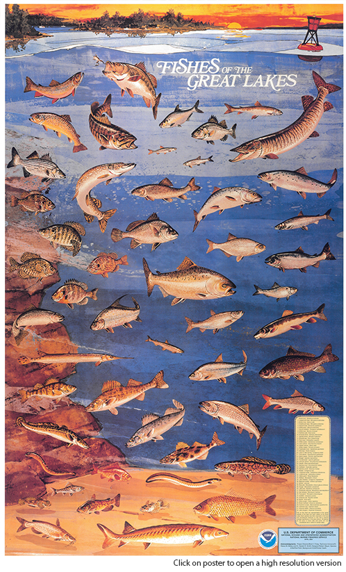 Native fish poster