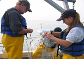 Gillnetting on Lake Huron